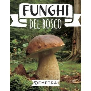 Funghi del bosco